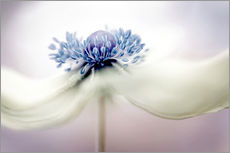 Gallery print  Anemone - Mandy Disher