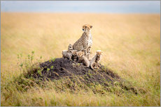 Wall sticker  Leopard mother - Ted Taylor