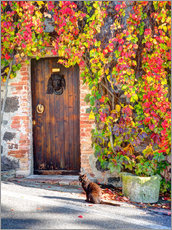 Gallery print  Cat in front of an ivy-lined door - Julie Eggers
