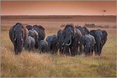 Gallery print  Elephants in the morning light - Ingo Gerlach