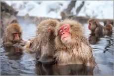Wall sticker Japanese Snow Monkeys in Nagano