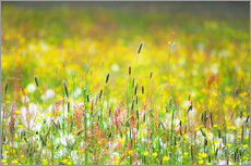 Gallery print  Spring Meadow - Suzka