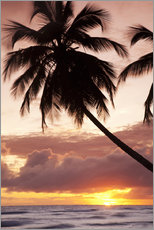 Gallery print  Tropical sunset in Barbados, Caribbean - Angelo Cavalli