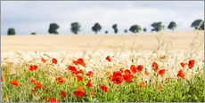 Wall Stickers  Poppies on the sidelines - Matthew Williams-Ellis