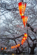 Michael Runkel - Red lanterns illuminating the cherry blossom in the Ueno Park, Tokyo, Japan, Asia