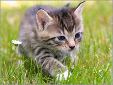 Wall sticker  Cat - Falko Follert