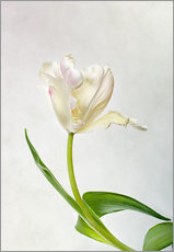 Wall Stickers  Tulip - Nailia Schwarz