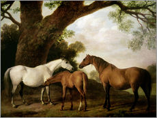 Gallery print  Two Shafto Mares and a Foal - George Stubbs