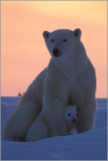Gallery print  Polar bear and cub - David Jenkins