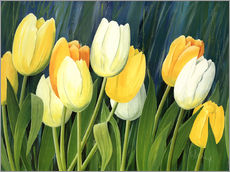 Gallery print  Tulips - Franz Heigl