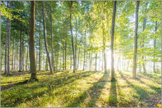 Wall Stickers  sunrise in the forest - Hannes Cmarits