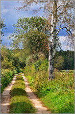 Gallery Print  Forest path with Birch - CAPTAIN SILVA