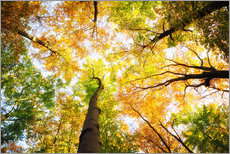 Gallery print  Treetops in autumn - Oliver Henze
