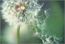 Wall sticker  Dandelion in the wind - Julia Delgado