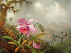 Gallery Print  Cattleya Orchid and Three Brazilian Hummingbirds - Martin Johnson Heade