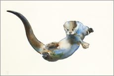 Gallery print  Floating Otter - Mark Adlington