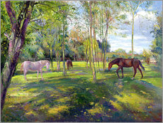 Gallery Print  Horse paddock - Timothy Easton