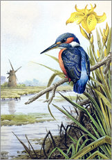 Gallery print  Kingfisher with iris and windmill - Carl Donner