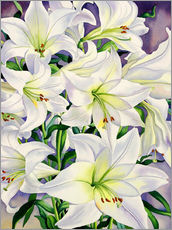 Gallery print  White lilies, 2008 - Christopher Ryland