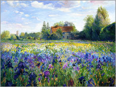 Gallery Print  Field of flowers in the sunset - Timothy Easton