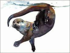 Gallery print  Sea otter in the water - Mark Adlington