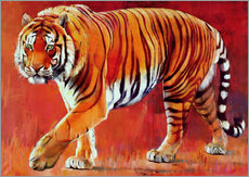 Gallery print  Bengal Tiger - Mark Adlington