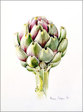 Gallery print  Study of an artichoke, 1993 - Alison Cooper