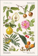 Gallery Print  Quince and other fruit-bearing trees - Elizabeth Rice