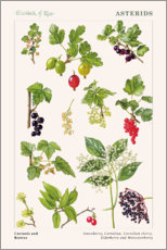 Gallery print  Currants and Berries - Elizabeth Rice