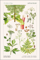 Gallery print  Yarrow and other plants - Elizabeth Rice