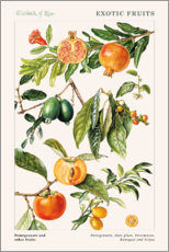 Gallery print  Pomegranate and other fruits - Elizabeth Rice