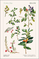 Wall sticker  Cowberry and other berries - Elizabeth Rice