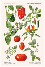 Wall sticker  Tomatoes and related vegetables, 1986 - Elizabeth Rice