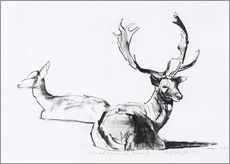 Gallery print  Lying deer couple - Mark Adlington