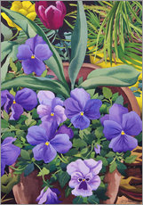 Gallery print  Flower pots with pansies, 2007 - Christopher Ryland