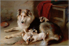 Gallery print  A collie with terrier puppies, 1913 - Walter Hunt
