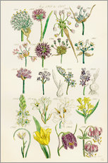 Wall sticker  Wildflowers, Sowerby 1281-1300 - Ken Welsh