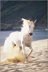 Gallery print  White horse on the beach - Vince Cavataio