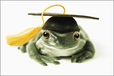 Wall sticker  Frog with completion hood - Darwin Wiggett