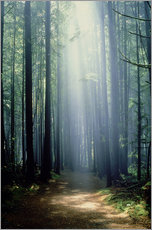 Gallery print  Misty path through the woods - Trevor Bonderud