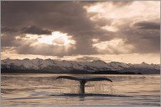 Gallery print  Humpback Whale at dusk - John Hyde