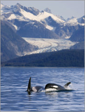 John Hyde - Orcas in Alaska