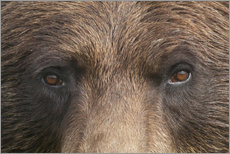 Doug Lindstrand - Face of a brown bear
