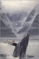 Wall sticker  Humpback whale emerging - Ron Sanford
