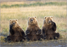 Gallery print  Three Grizzlies in the meadow - Gary Schultz