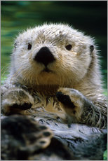 Gallery print  Percussion Otter - Harry M. Walker