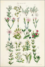 Wall Stickers  British wildflowers - Ken Welsh