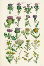 Wall sticker  wildflowers - Sowerby Collection