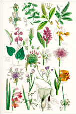 Wall sticker  Wild Flowers - Sowerby Collection