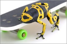 Wall Stickers  Frog On A Skateboard - Corey Hochachka